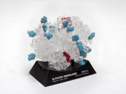Glycated Hemoglobin HbA1c, Hemglobin, HbA1c, Haemoglobin, Diabetes, Blood Test, Casey Steffen, Biologic Models, Biologic Discovery, Protein model, molecule,