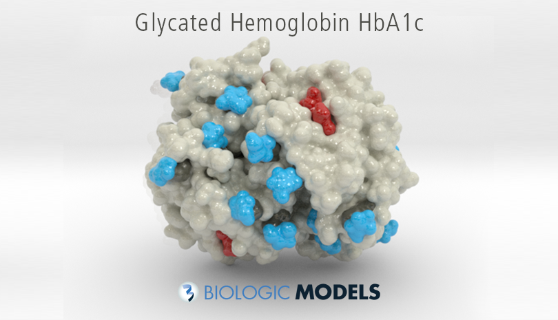 Glycated Hemoglobin, HbA1c, Biologic Models,
