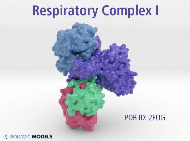 Respiratory Complex 1, 2FUG