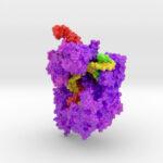 3D Print of CRISPR Cas9