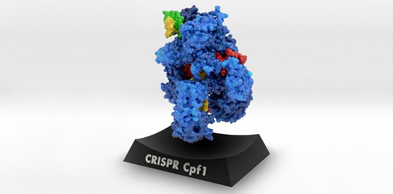 CRISPR Cpf1, Biologic Models