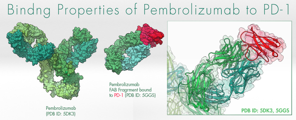 Pembrolizumab, Keytruda, PD1, biologic models,