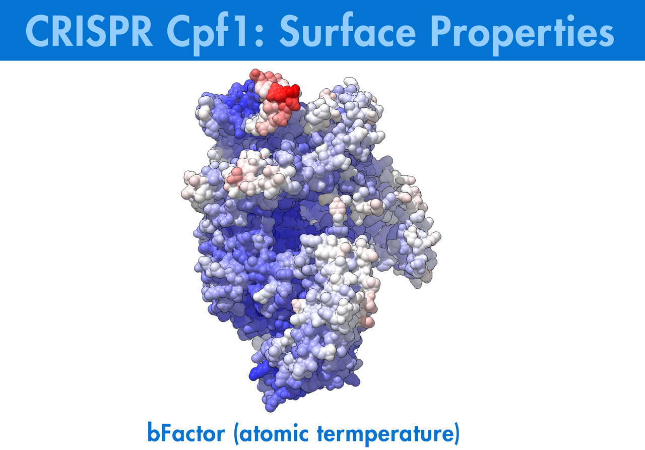 CRISPR, Cpf1, Genome, Molecular Animation, Biologic Animation, Biologic Models,