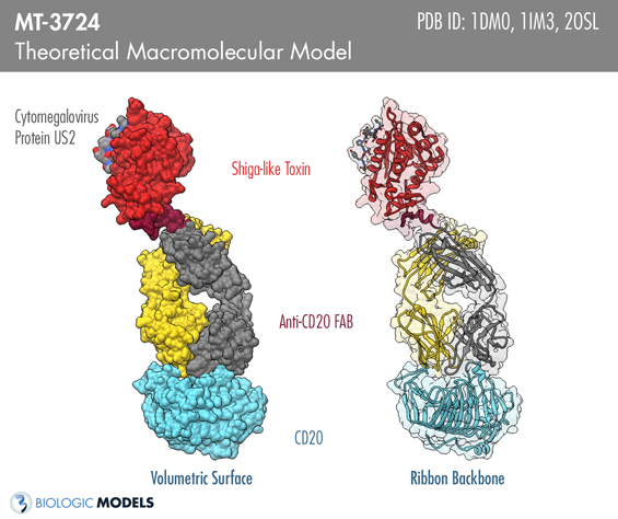 MT-3724, Biologic Models, Molecular Templates,