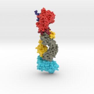 MT-3724, Molecular Templates, Biologic Models,