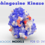 Sphingosine Kinase 1, 3VZB