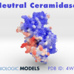 Neutral Ceramidase, Biologic Models, 4WGK