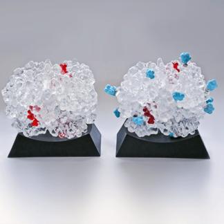 HbA1c, Glycated Hemoglobin A1c, Biologic Models
