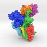Oligosaccharyltransferase Complex, OST, ETH Zurich, Biologic Models