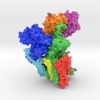 Oligosaccharyltransferase Complex, OST,