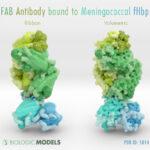 fHbp, Fusion H-binding protein, Antibody, FAB, Biologic Models