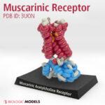 Muscarinic Acetylcholine Receptor, 3UON