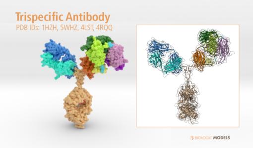 Trispecific Antibody, Biologic Models