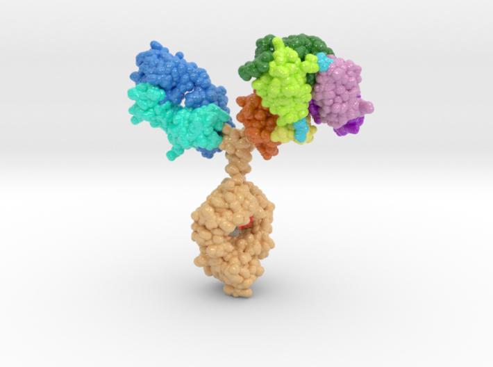 Trispecific Antibody, Biologic Models,