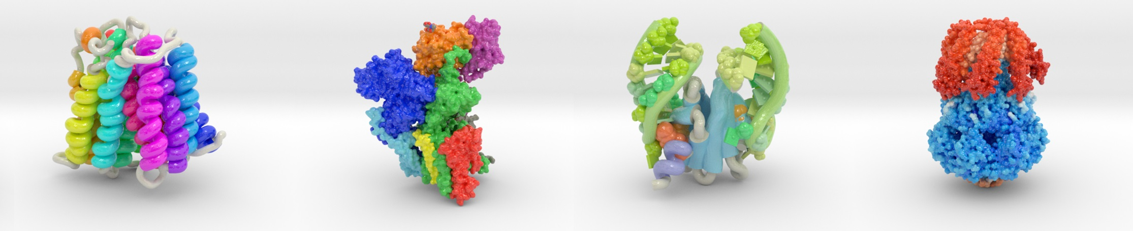 Biologic Models
