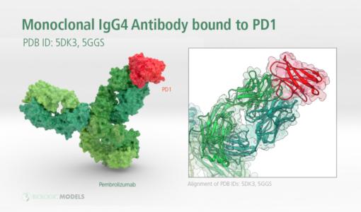 5DK3, 5GGS, Pembrolizumab, Keytruda, Biologic Models, IgG4, monoclonal antibody