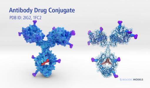 Antibody Drug Conjugate