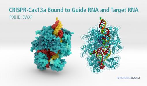 CRISPR. Cas13a, Biologic Models