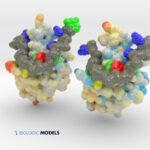 TDP-43, ALS, Biologic Models