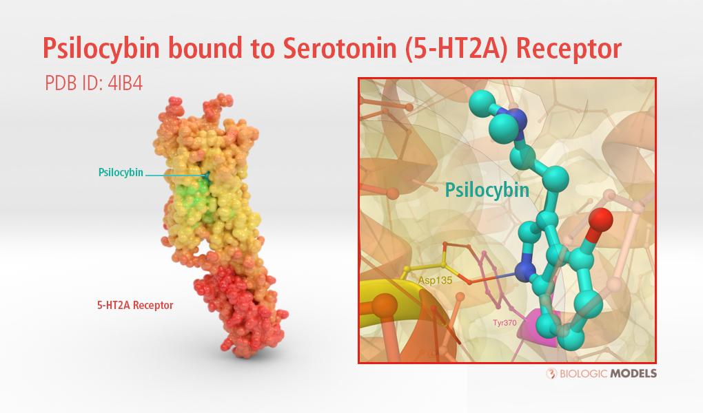 Psilocybin, Serotonin Receptor, 4IB4, 3D Print, molecular model