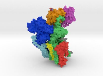 Oligosaccharyltransferase (OST) Complex 3d printed