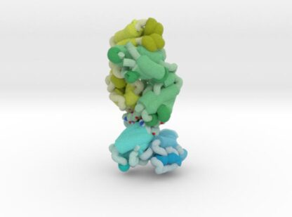FAB Antibody bound to Meningococcal fHbp (Ribbon) 3d printed