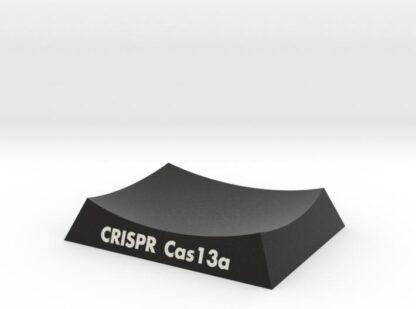 CRISPR-Cas13a Base 3d printed