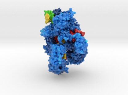 CRISPR-Cpf1 Complex with guide RNA and Target DNA 3d printed