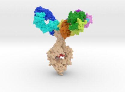 Trispecific Antibody (PRO) 3d printed