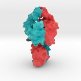 Topoisomerase II DNA Complex 4GFH 3d printed