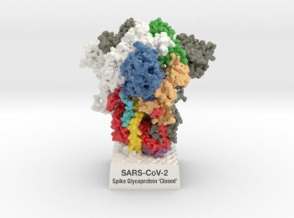 SARS-CoV-2 Spike Glyocoprotein 'Closed' 6VXX 3d printed