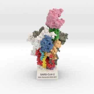 SARS-CoV-2 Spike Glyocoprotein 6VXX-6M17 3d printed