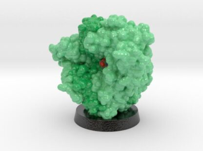 Penicillin Acylase 1FXV 3d printed